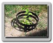 Декоративное садовое ограждение Премиум для защиты растений