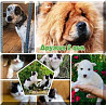 Собаки и щенки в дар Москва